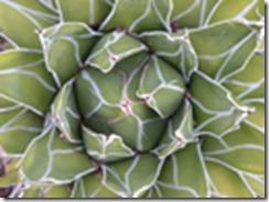 agave pattern motif