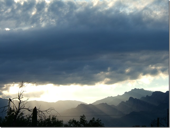 monsoon morn1