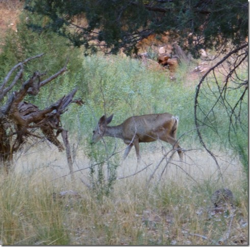 grotto mule deer1